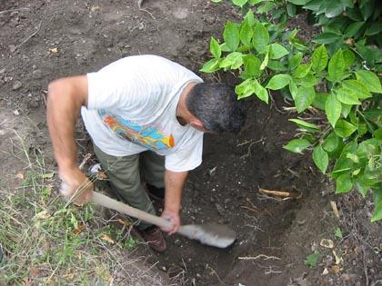 digging01.jpg